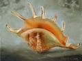 paveikslas_KRIAUKLĖ2 18x24 cm